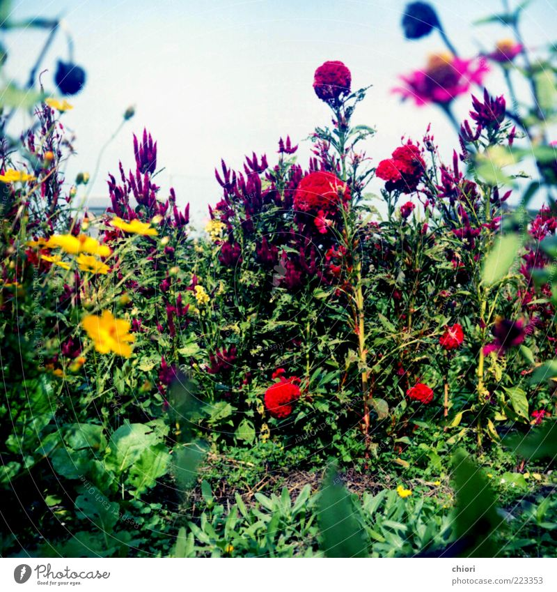Alice Life Art Work of art Sun Spring Kissing Looking Growth Blue Multicoloured Yellow Gray Green Violet Red Beautiful Colour photo Morning Day