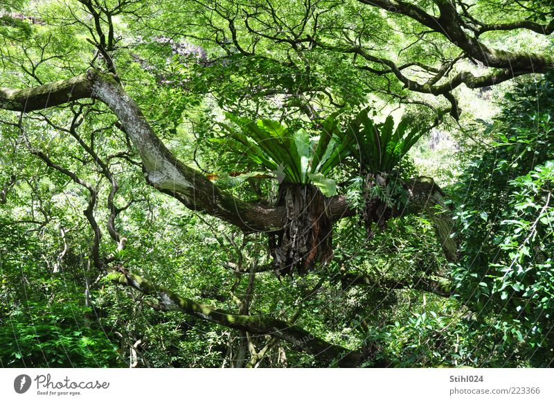 Nature Tree Green Plant Summer Black Wet Growth Wild Elements Virgin forest Exotic Flexible Forest Fern Expedition