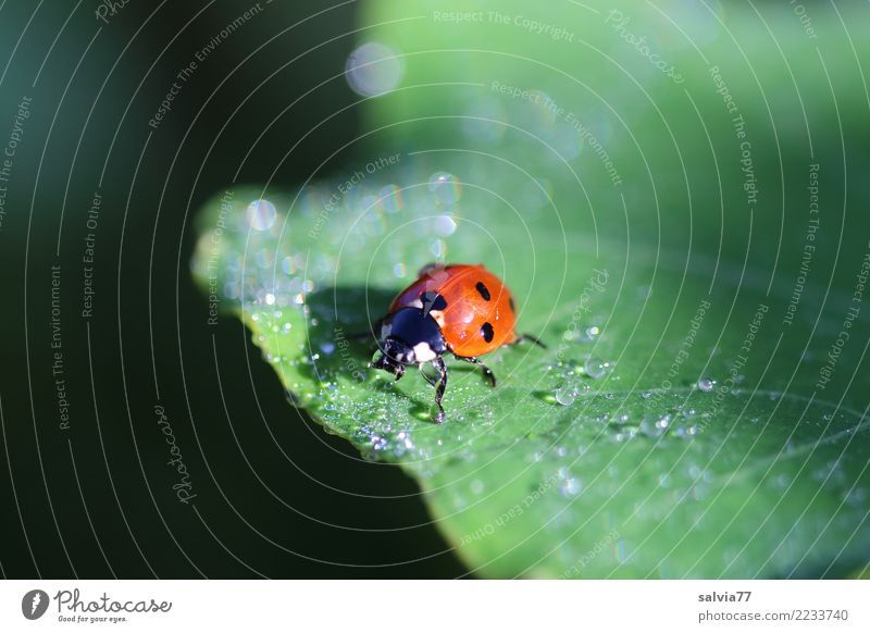 Nature Plant Summer Green Animal Leaf Calm Black Natural Happy Orange Glittering Fresh Drops of water Insect Positive