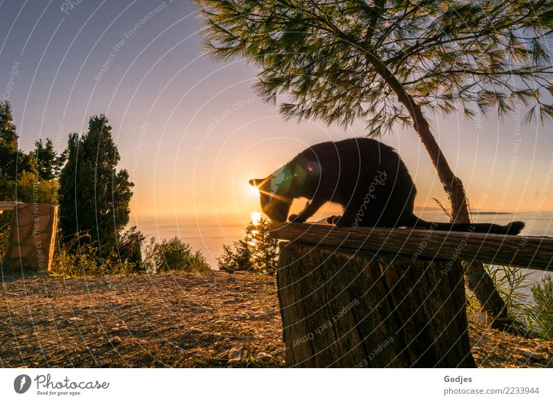 Cat on a wooden bench at sunset Landscape Earth Water Cloudless sky Horizon Sunrise Sunset Summer Tree Grass Bushes Ocean Mediterranean sea Corfu Pet 1 Animal