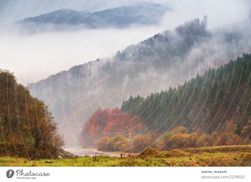 Autumn rain and fog in the mountains. Fog over the river Nature Vacation & Travel Plant Green Landscape Tree Red Clouds Far-off places Forest Mountain Yellow