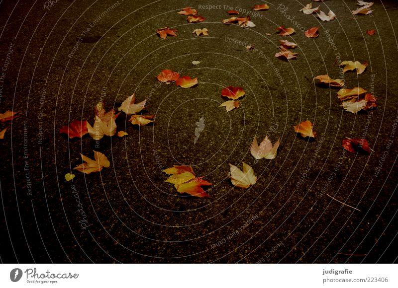 Nature Plant Leaf Dark Autumn Environment Moody Lie Multiple Natural Change Transience Asphalt Calm Autumn leaves Autumnal