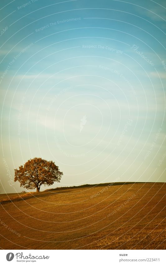 Sky Nature Plant Tree Loneliness Landscape Environment Far-off places Autumn Horizon Field Earth Climate Beautiful weather Elements Individual
