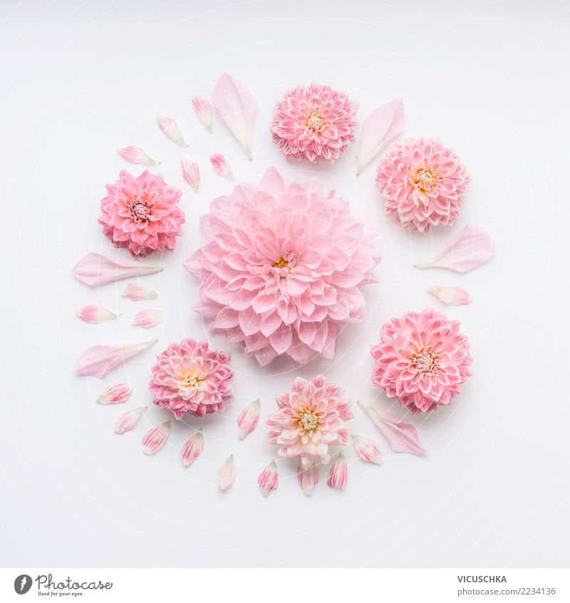 Round pale pink flowers composition Style Design Feasts & Celebrations Valentine's Day Mother's Day Wedding Birthday Nature Plant Flower Rose Blossom Decoration
