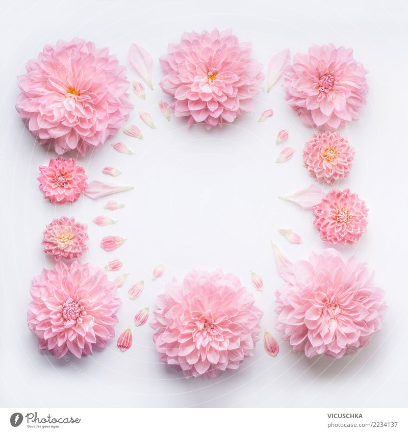 Nature Plant Flower Leaf Blossom Love Background picture Style Feasts & Celebrations Pink Design Decoration Elegant Birthday Wedding Wellness