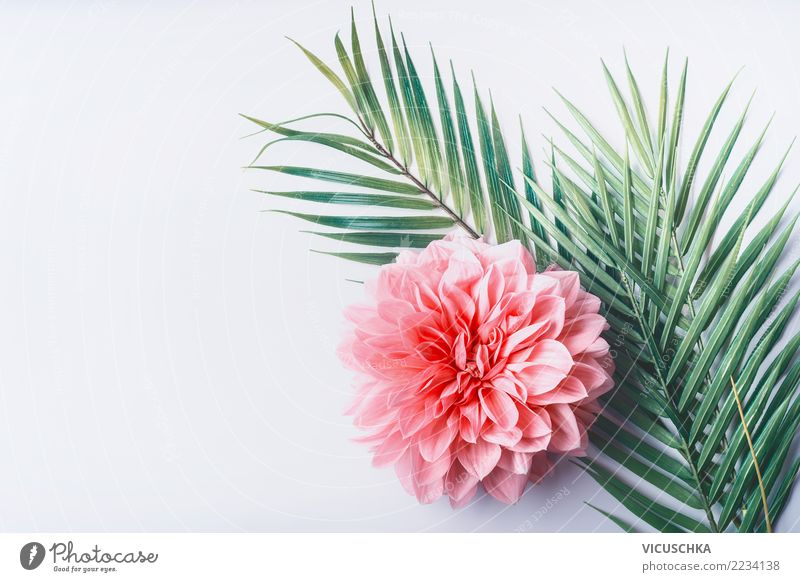 Tropical leaves with pink flower Style Design Desk Nature Plant Flower Leaf Blossom Fashion Decoration Bouquet Pink Background picture Conceptual design