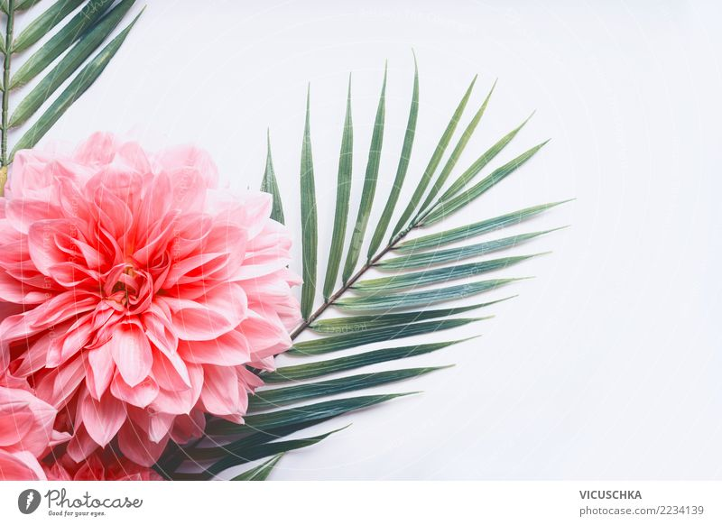 Pink flowers and tropical leaves on white Style Design Summer Plant Flower Leaf Blossom Hip & trendy Conceptual design Tropical Palm frond Rose