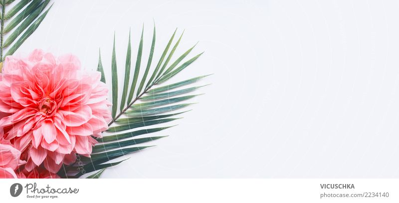 Tropical palm leaves with pink flowers Style Design Summer Plant Flower Leaf Blossom Decoration Flag Green Pink White Background picture Conceptual design