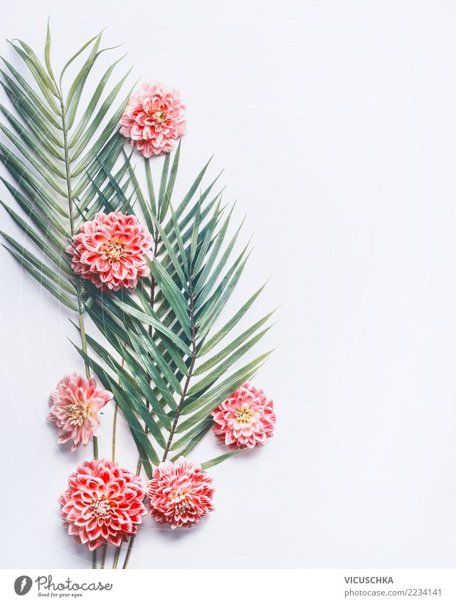 Tropical palm leaves and pink flowers Style Design Exotic Wellness Desk Nature Plant Flower Leaf Blossom Fashion Pink Background picture Conceptual design