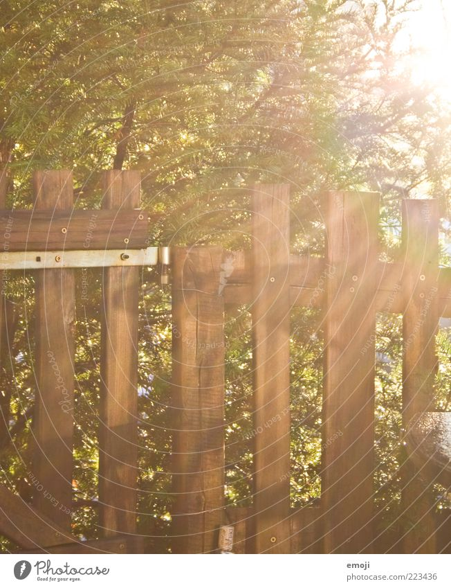 Tree Autumn Wood Garden Warmth Brown Closed Bushes Illuminate Border Fence Boundary Garden fence Garden door