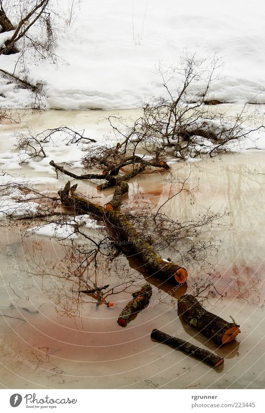 Nature Water White Tree Plant Red Winter Loneliness Cold Snow Death Wood Brown Wet Sleep Climate