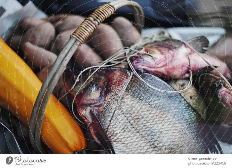 Some fish for dinner. Food Fish Seafood Lunch Dinner Animal Wild animal Dead animal Group of animals Blue Brown Multicoloured Black Silver White Nature