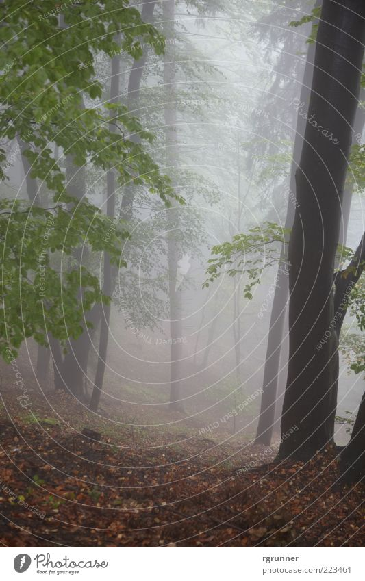 Nebelwald Nature Autumn Fog Tree Leaf Forest Fear Exterior shot Deserted Dawn Central perspective Day