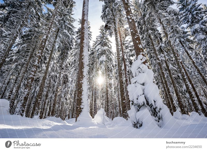 Blue White Sun Landscape Tree Winter Forest Snow Seasons Fir tree Snowscape Black Forest