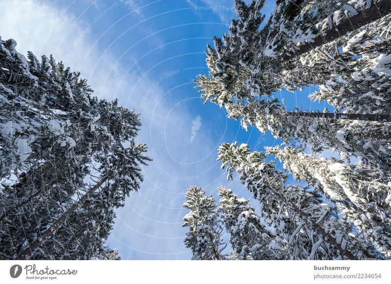 Tree tops in winter Winter Landscape Forest Blue White Perspective Seasons Landscape format Snow fir tree Snowscape Sky cold Black Forest Colour photo