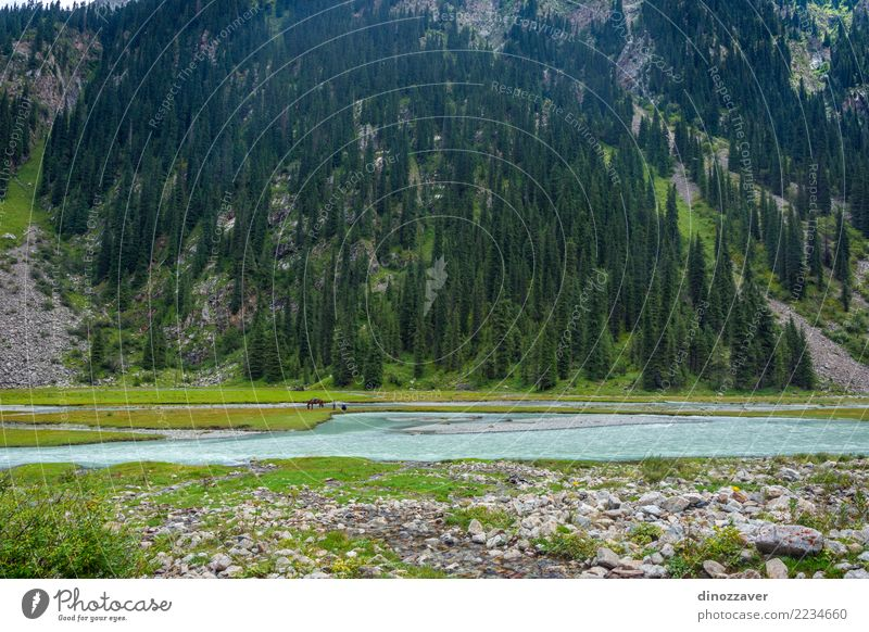 Fishing by the river, Kyrgyzstan Beautiful Summer Mountain Man Adults Environment Nature Landscape Clouds Tree Park Forest Hill Lake River Transport Horse Green