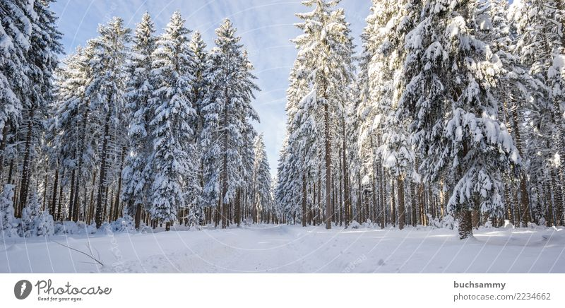 Upper Black Forest in Winetr Winter Landscape Tree Blue White Seasons panorama Landscape format Snow fir trees Snowscape Sky cold Fir tree Copy Space bottom Day