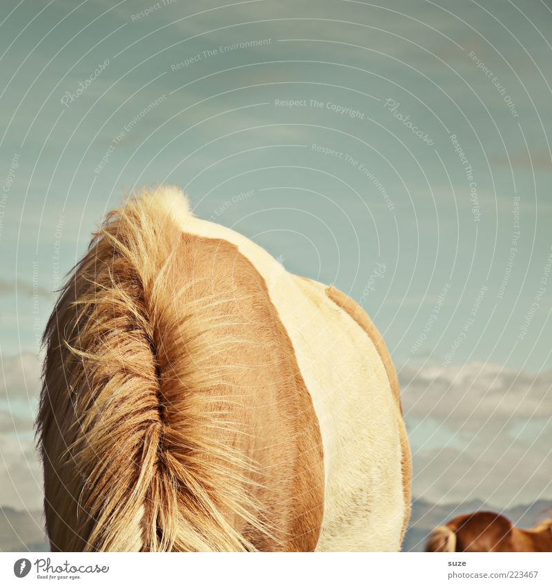 Sky Animal Brown Funny Horse Wild Back Wild animal Exceptional Pelt Neck To feed Pony Hiding place Headless
