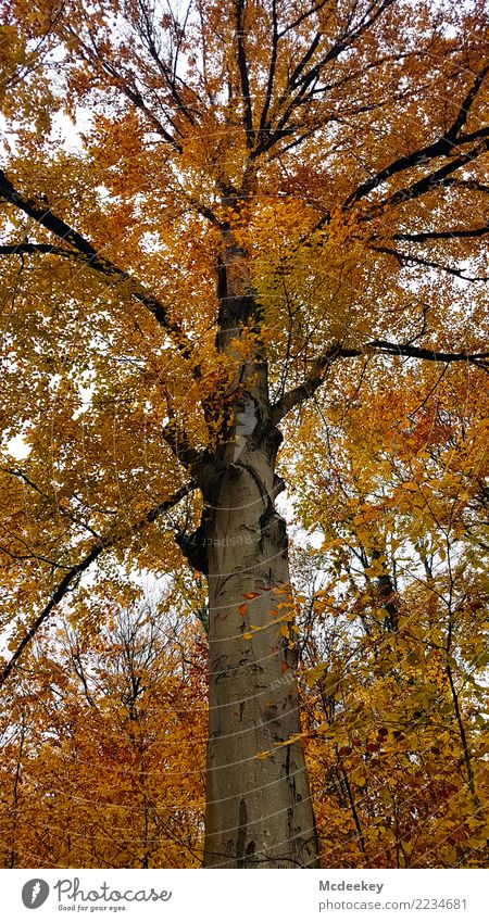 ladder to heaven Environment Nature Landscape Plant Sky Clouds Autumn Bad weather Rain Tree Bushes Leaf Wild plant Forest Faded Growth Authentic Large Infinity
