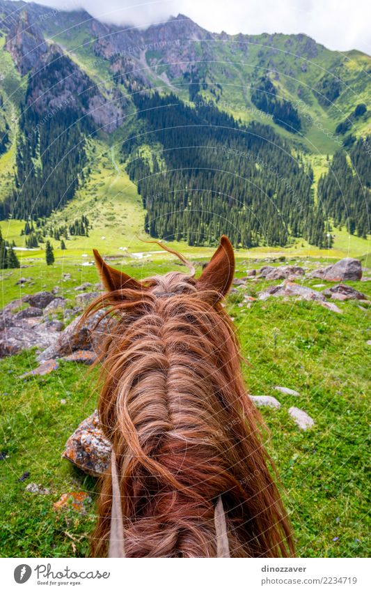 View over valley from the horse back, Kyrgyzstan Lifestyle Leisure and hobbies Vacation & Travel Summer Mountain Sports Nature Landscape Animal Grass Park