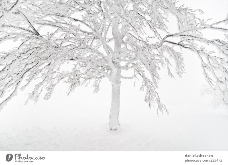 White Tree Winter Cold Snow Bright Ice Weather Fog Climate Frost Branch Tree trunk Beech tree Black Forest Twigs and branches
