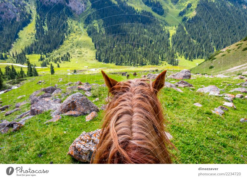 View to steep path from the horse back, Kyrgyzstan Lifestyle Leisure and hobbies Vacation & Travel Summer Mountain Sports Nature Landscape Animal Grass Park