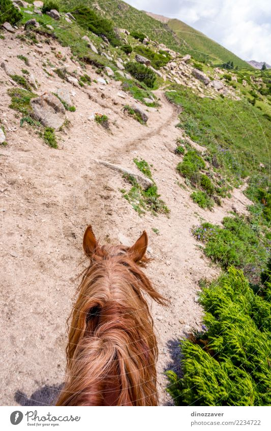 View to steep path from the horse back, Kyrgyzstan Lifestyle Relaxation Leisure and hobbies Vacation & Travel Summer Mountain Sports Nature Landscape Animal