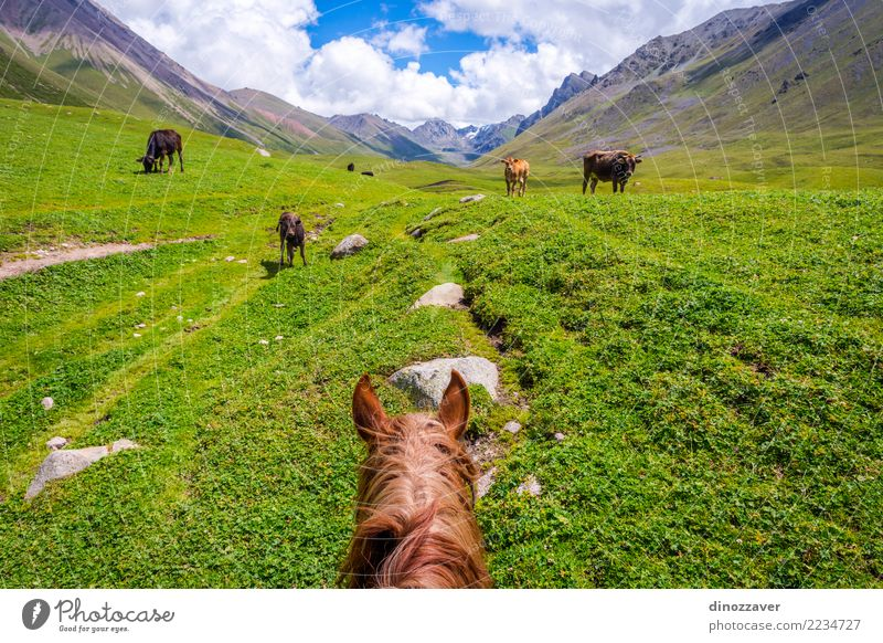 View over valley from the horse back, Kyrgyzstan Lifestyle Relaxation Vacation & Travel Summer Mountain Sports Nature Landscape Animal Grass Park Meadow