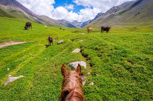 View over valley from the horse back, Kyrgyzstan Nature Vacation & Travel Summer Landscape Relaxation Animal Mountain Lifestyle Meadow Sports Grass Brown Wild