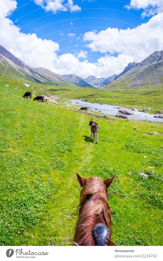 Beautiful valley of Altyn Arashan, Kyrgyzstan Nature Vacation & Travel Summer Green Landscape Animal Forest Mountain Meadow Grass Tourism Wild Hiking Park