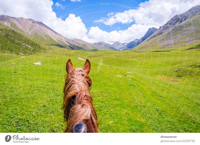 View over valley from the horse back, Kyrgyzstan Lifestyle Relaxation Leisure and hobbies Vacation & Travel Summer Mountain Sports Nature Landscape Animal Grass