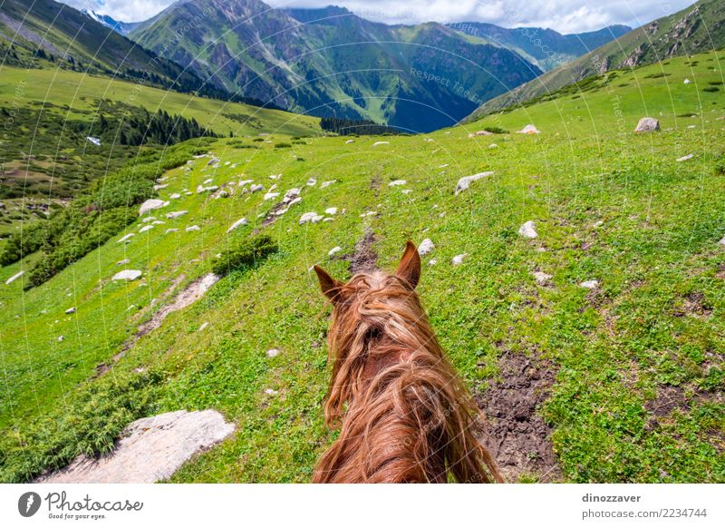 View over valley from the horse back, Kyrgyzstan Nature Vacation & Travel Summer Landscape Relaxation Animal Mountain Lifestyle Meadow Lanes & trails Sports