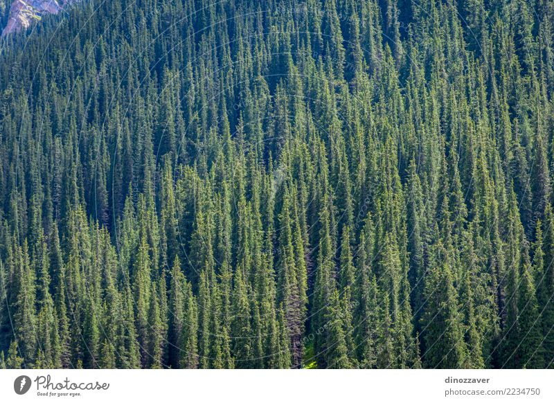 Spruce forest in the mountains Nature Vacation & Travel Plant Summer Beautiful Green Landscape Tree Forest Mountain Environment Natural Park Vantage point Hill