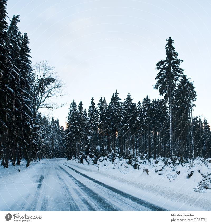 Nature Tree Winter Forest Street Cold Snow Landscape Lanes & trails Moody Ice Climate Threat Frost Driving Sign