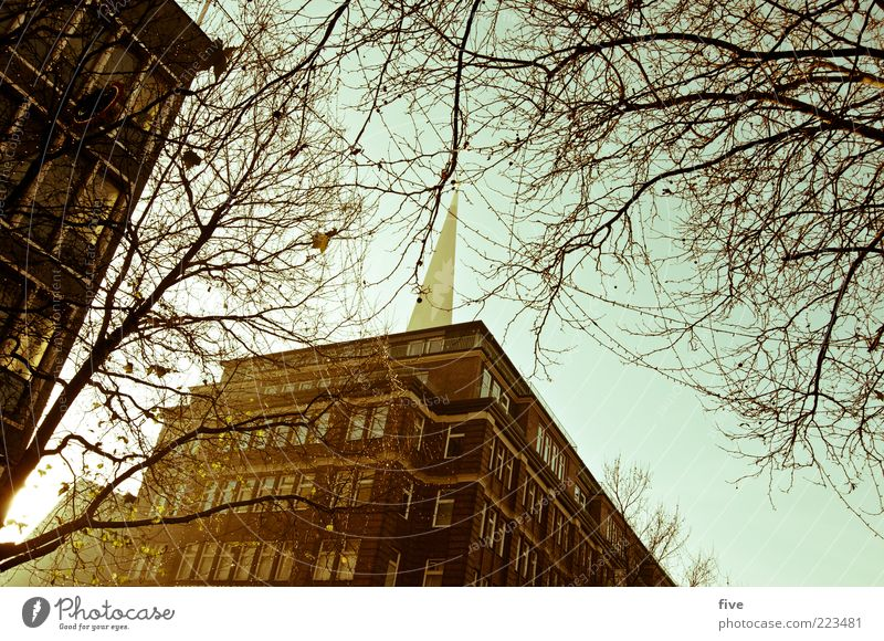 Sky Old City Tree Plant Winter House (Residential Structure) Wall (building) Window Wall (barrier) Architecture Building Bright Facade High-rise Hamburg