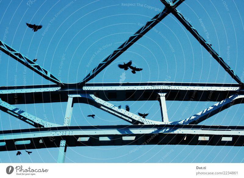 Bodega Bay is everywhere Sky Cloudless sky Bridge Manmade structures Animal Bird Flock Steel Flying Blue Raven birds Crow Bridge pier Steel construction