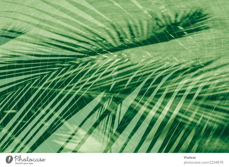 what a feeling III Palm tree Leaf Double exposure Vacation & Travel Summer Green Plant Structures and shapes
