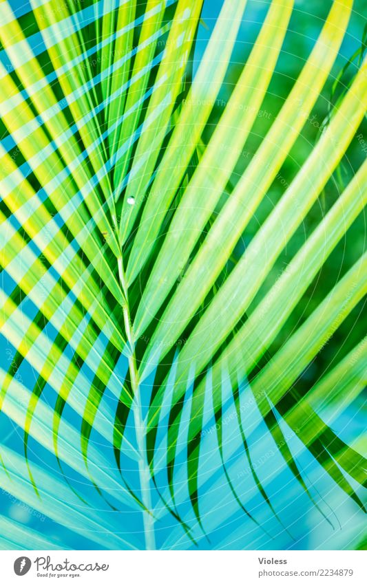 What a Feeling Palm tree Leaf Double exposure Vacation & Travel Summer Blue Green Plant To enjoy Sun Caribbean Beach