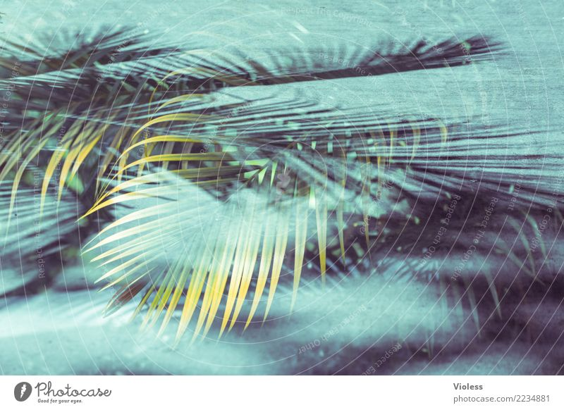 Vacation & Travel Plant Blue Summer Green Sun Leaf Beach To enjoy Double exposure Palm tree Caribbean