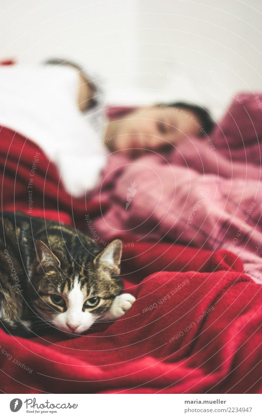 siesta Feminine Woman Adults 1 Human being 18 - 30 years Youth (Young adults) Animal Pet Cat Animal face Think To enjoy Sleep Dream Hiking Living or residing