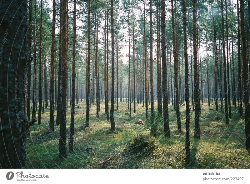 Magical forest Beautiful Tree Sun Summer Vacation & Travel Forest Trip Tourism Discover To enjoy Sightseeing Determination