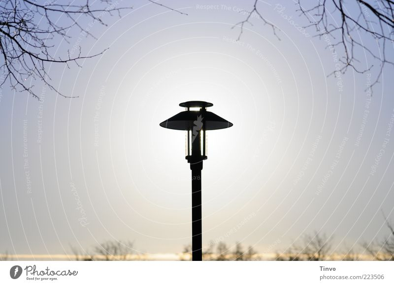 Far-off places Energy industry Illuminate Solar Power Street lighting Twig Beautiful weather Blue sky Rod Twigs and branches Cloudless sky