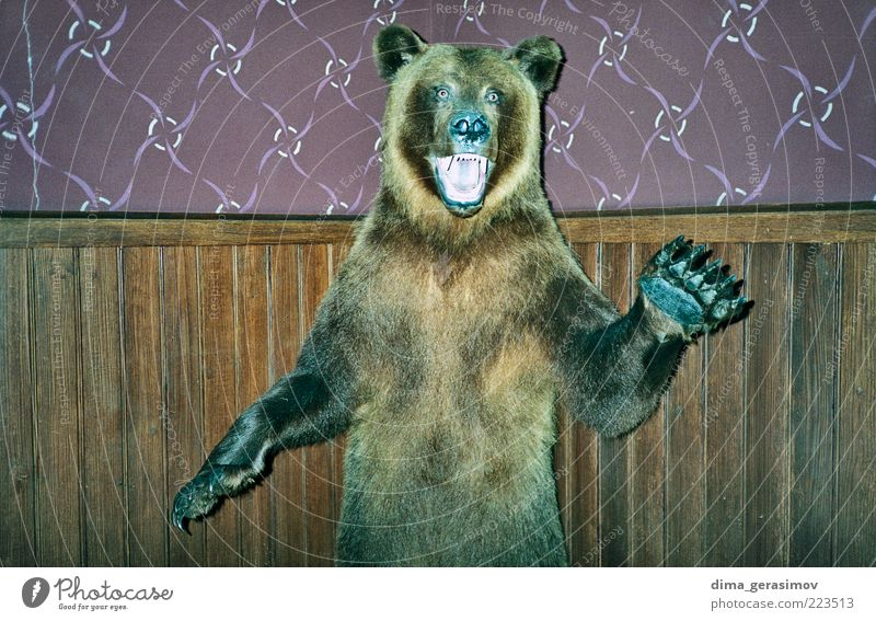 Furious dead bear. Beautiful Animal Colour Brown Dirty Might Wild Mysterious Creepy Pain Strong Wild animal Exotic Aggression Shame Desire
