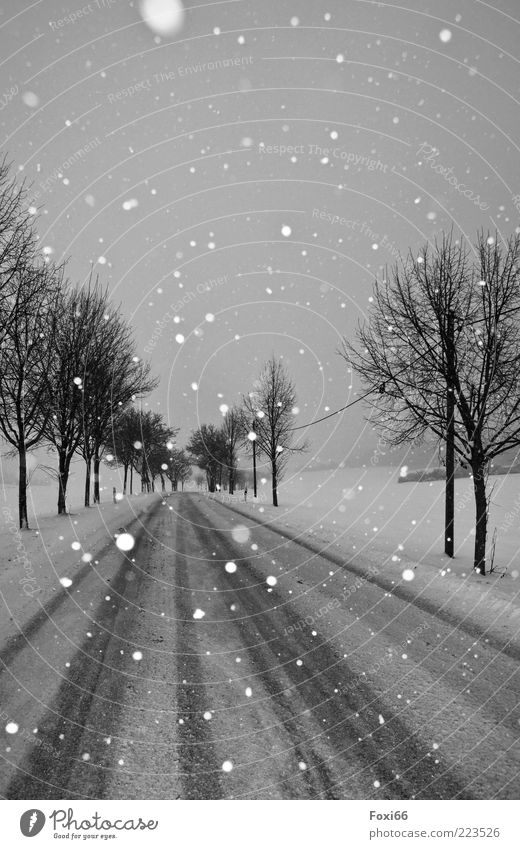 Nature White Tree Beautiful Winter Calm Black Street Snow Movement Landscape Environment Snowfall Moody Time Uniqueness