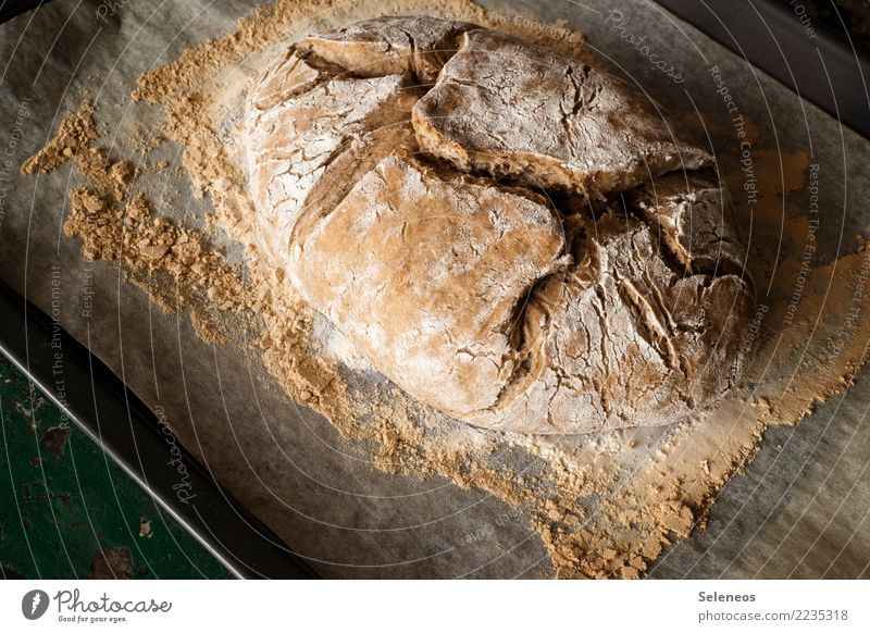 country bread Food Grain Dough Baked goods Bread Nutrition Eating Breakfast Dinner Organic produce Vegetarian diet Fresh Healthy Delicious Colour photo