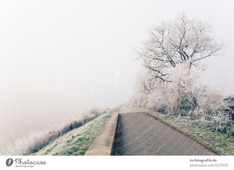 Sky Nature Plant Green White Tree Landscape Winter Cold Lanes & trails Gray Ice Fog Bushes Frost End