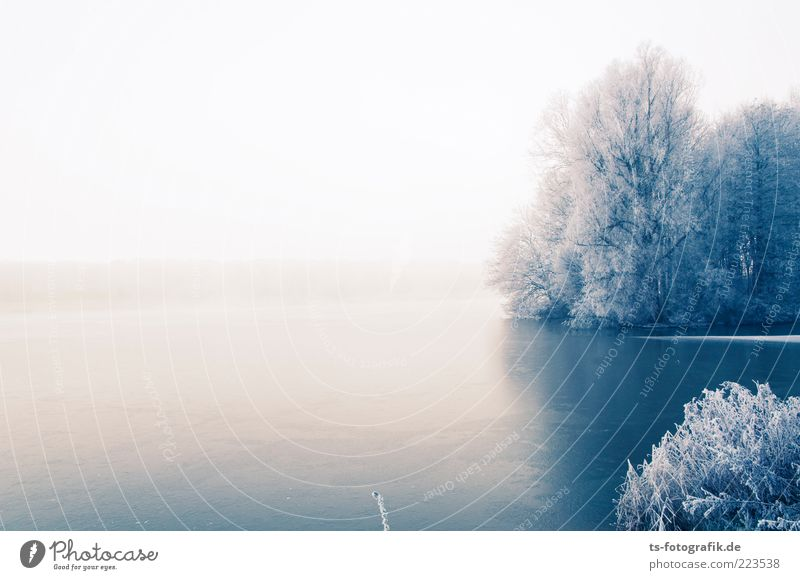 Winter Blues I Environment Nature Landscape Plant Sky Horizon Fog Ice Frost Snow Tree Forest Coast Lakeside River bank Cold White Hoar frost Frozen surface