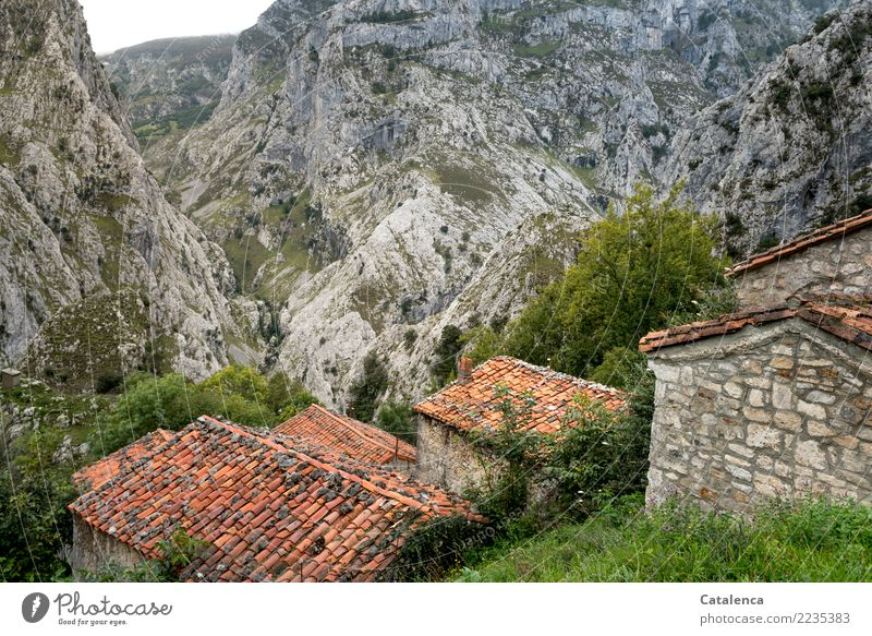 Beyond the mainstream, a village for cattle. Nature Landscape Grass Bushes Rock Mountain Village House (Residential Structure) Barn Wall (barrier)