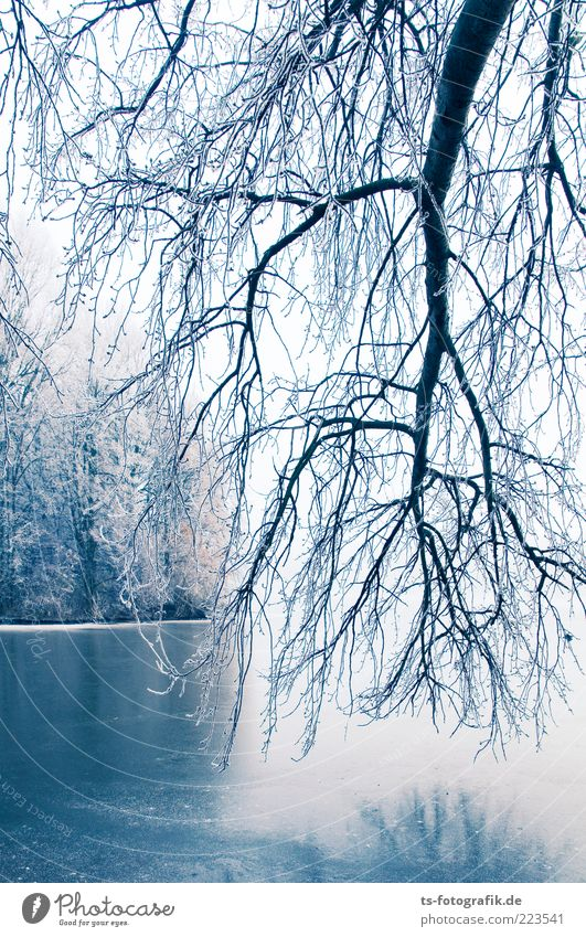 Winter Blues II Environment Nature Landscape Plant Elements Ice Frost Snow Tree Forest Coast Lakeside River bank Cold White Hoar frost Branch Suspended