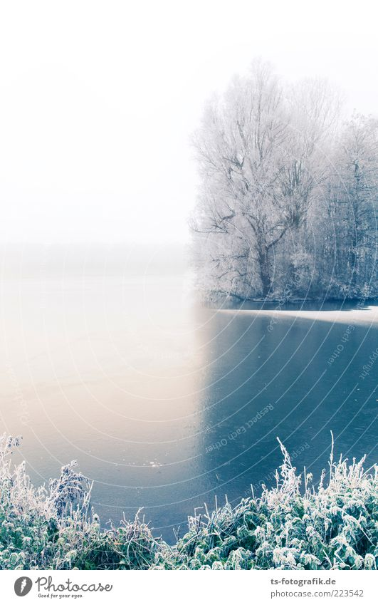 Winter Blues III Environment Nature Landscape Plant Elements Horizon Fog Ice Frost Snow Tree Bushes Forest Coast Lakeside River bank Pond Cold White Hoar frost
